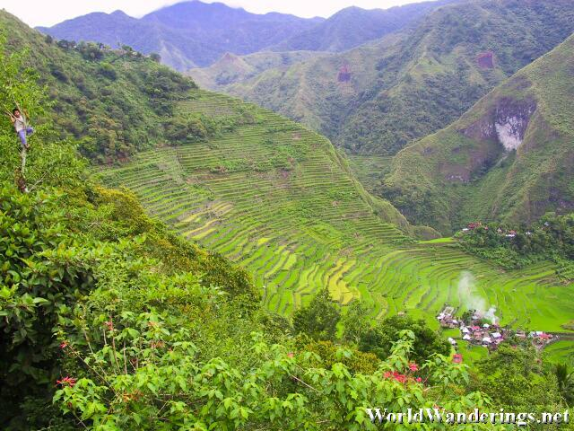 Ampitheater Like Batad Rice Terraces