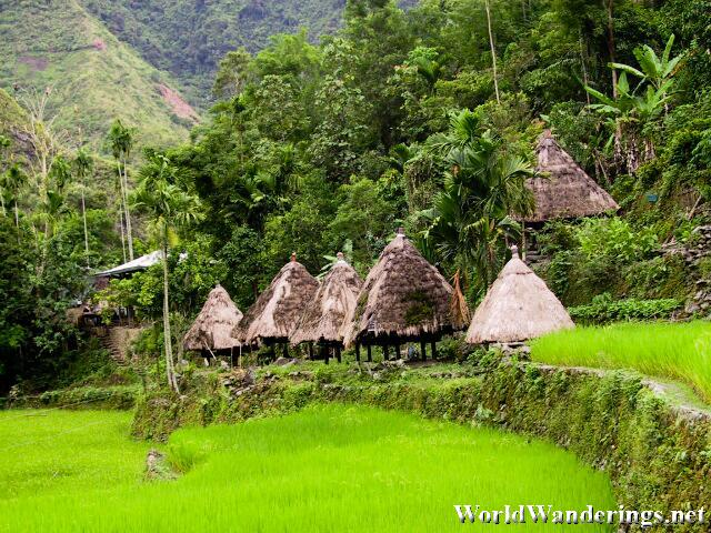 Traditional Ifugao Houses Along the Terraces