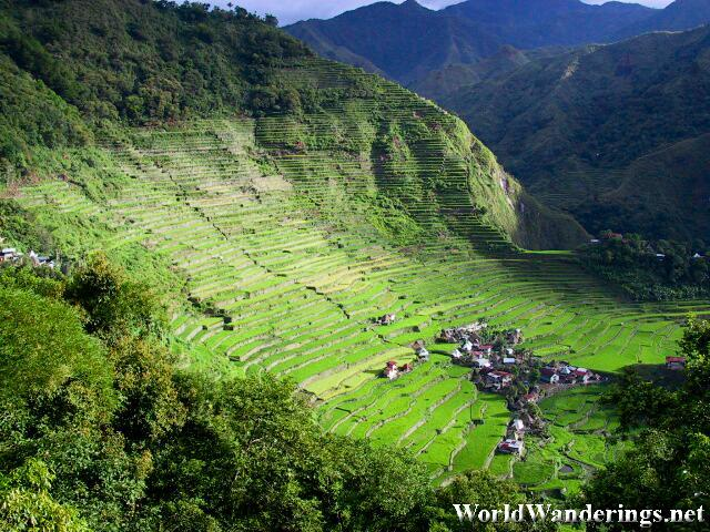 Morning Sun Light Shines a Wondrous Light on the Batad Rice Terraces