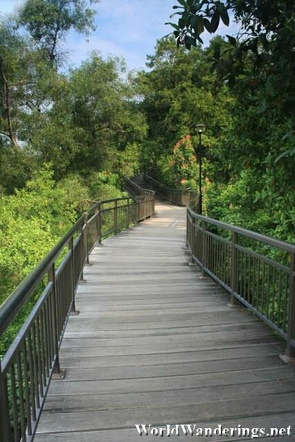 Elevated Walkway at the Canopy Walk