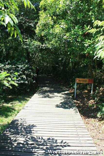 Wooden Walkway in Sungei Buloh Wetlands Reserve