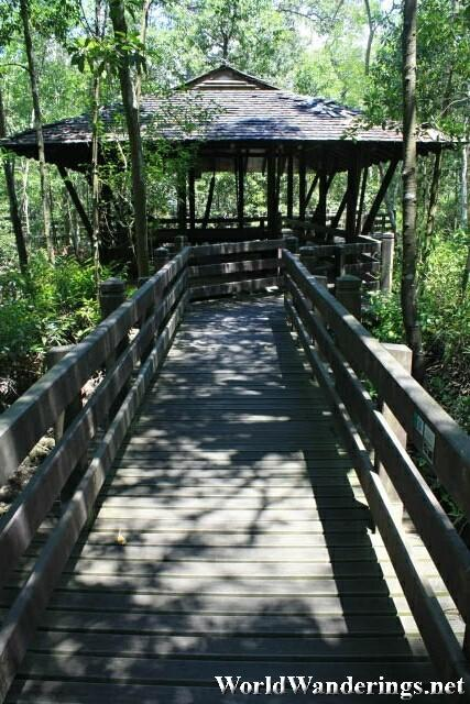 Wooden Walkway Through the Margrove Forest