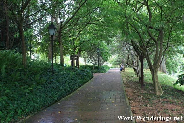 Peaceful Walk in the Woods at Fort Canning Hill