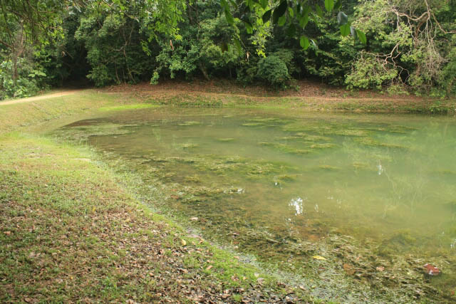 Swampy Water Near the Jering Trail