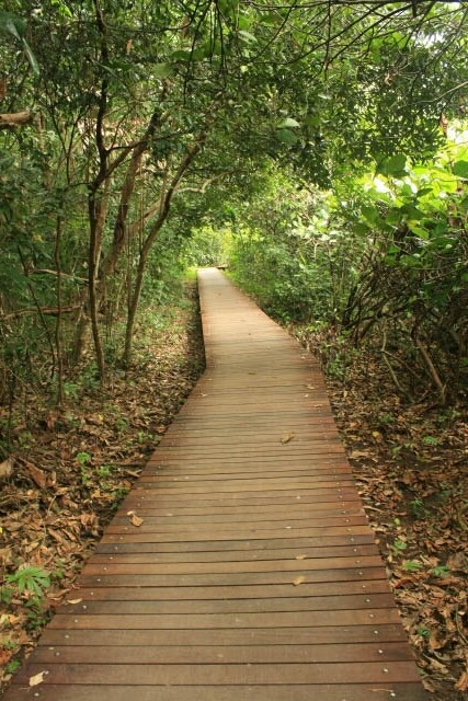 Boardwalk Through the Forest at the MacRitchi Nature Park