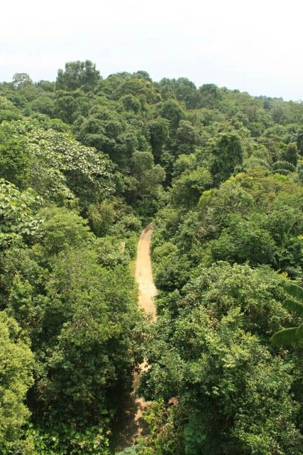 Jungle Trail from the Jelutong Tower