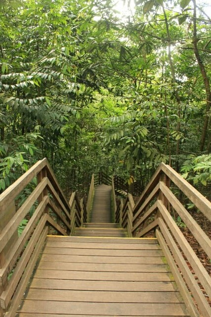 Way Down to the Tree Top Walk