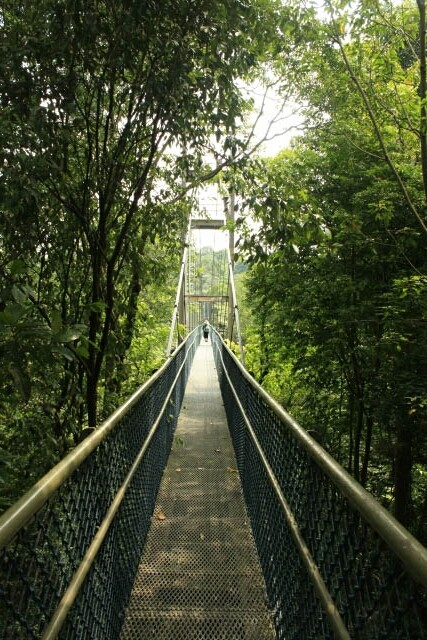Tree Top Walk at MacRitchie Nature Park
