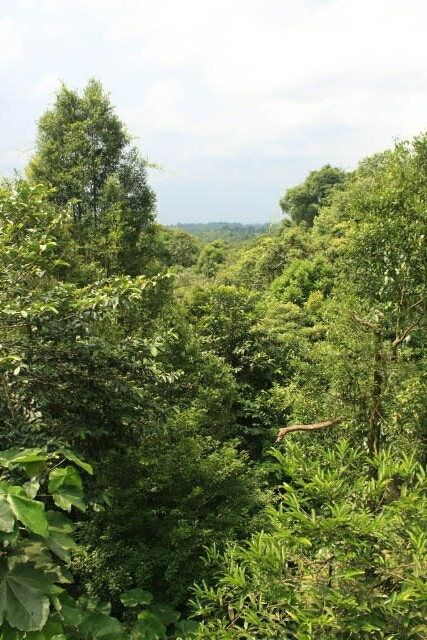 Trees from the Tree Top Walk