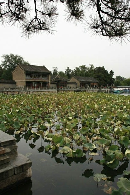 Old Chinese Buildings? Check. Lotus leaves? Check.