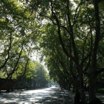 Tree Lined Street of Hangzhou 杭州