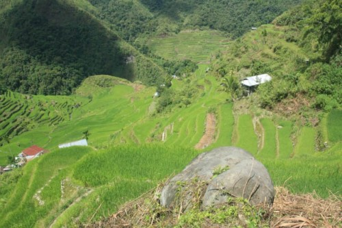 Greenery All Around at the Batad Rice Terraces