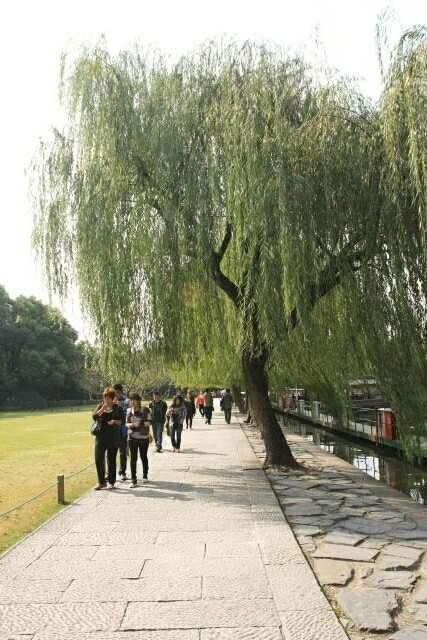 Willow Trees Line the Walkway Along the West Lake 西湖