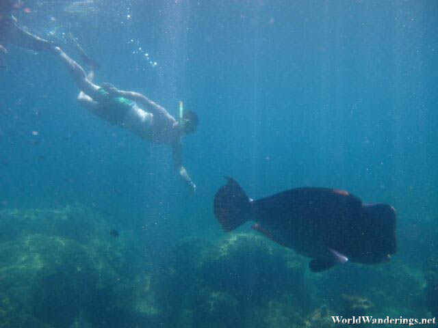 Large Fish Chasing at Turtle Beach in Perhentian Kecil
