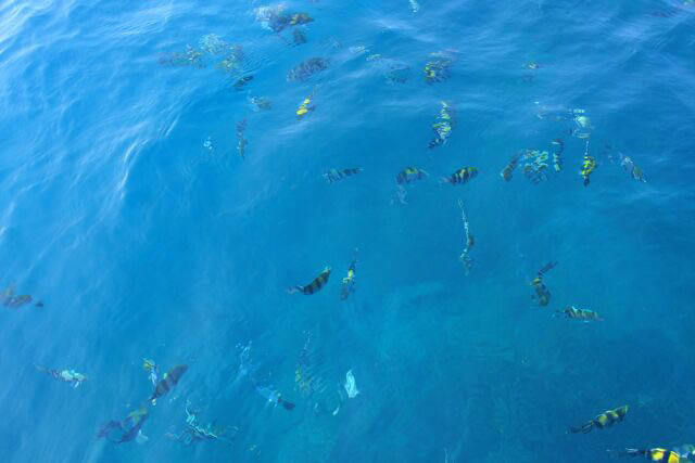 Numerous Fish on the Surface of the Water