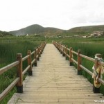 Wooden Walkway to the Lake Shore