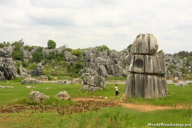 Field of Rocks at the Stone Forest 石林 in Yunnan 云南