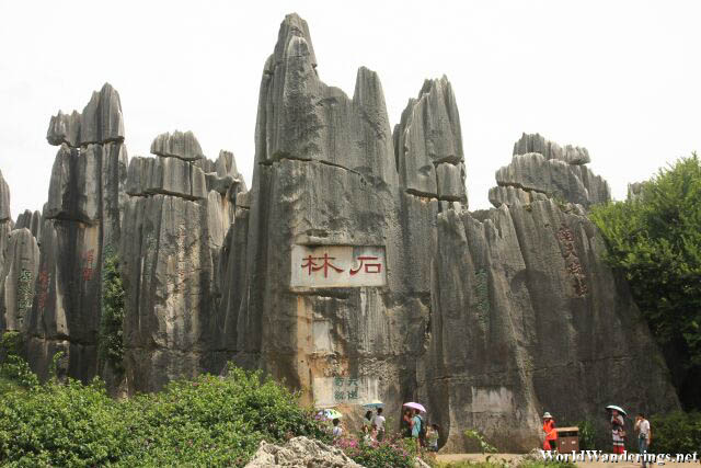 Stone Forest Carved into the Rock Face