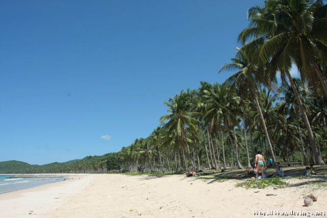 Coconut Trees Line Nacpan Beach