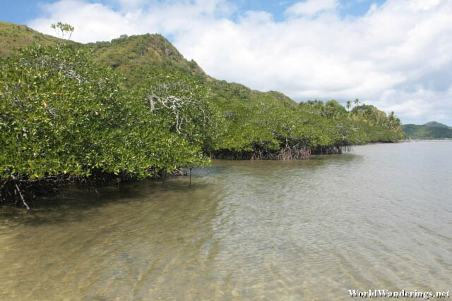 Mangroves of Snake Island