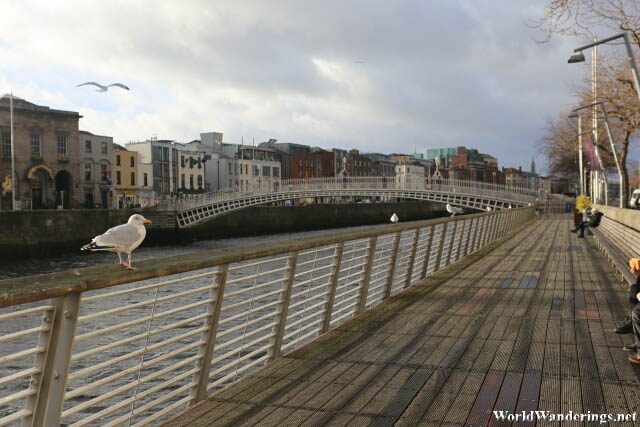 Seagull Resting at a Fence Along the River Liffey