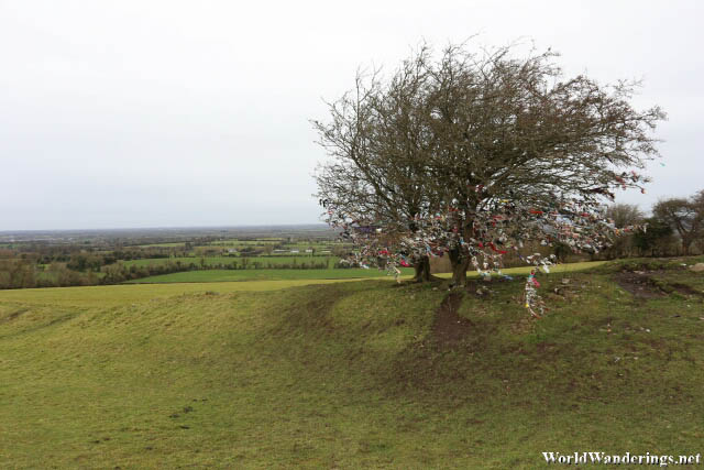 Interestingly Decorated Tree at the Hill of Tara