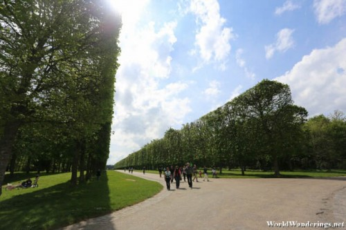 Beautifully Trimmed Trees at the Gardens of Versailles