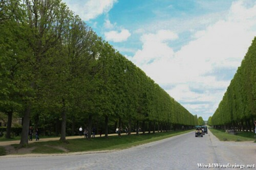 Endless Hedge at the Gardens of Versailles