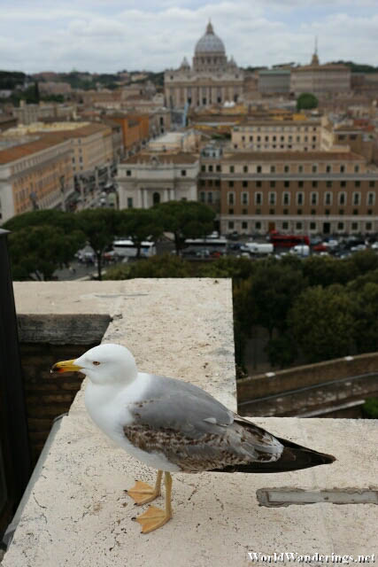 A Look at Saint Peter's Basilica from Castel Sant'Angelo in Rome