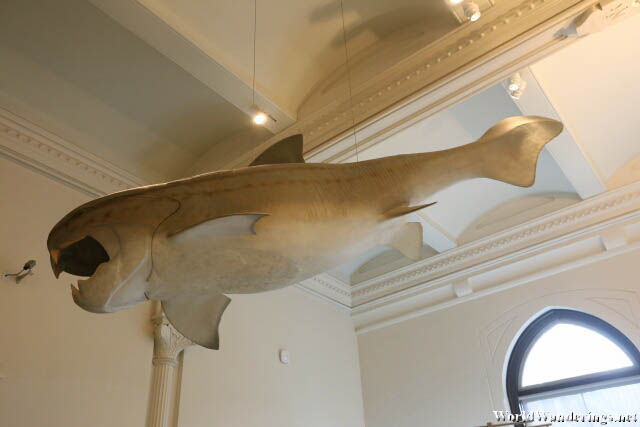 Giant Armoured Fish at the American Musuem of Natural History