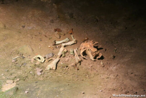 Skeletal Remains of a Bear Found in Ailwee Cave