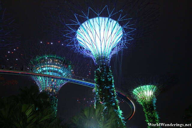 Looking at the Supertrees at the Gardens by the Bay