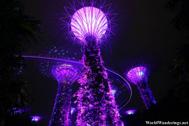 Alien Purple Color of the Supertrees at the Gardens by the Bay