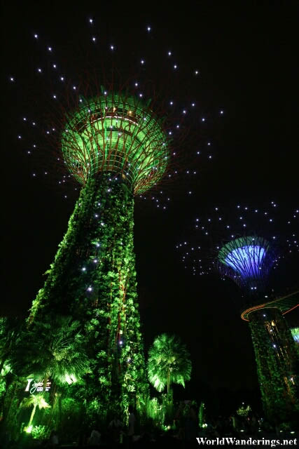 Close Up of the Supertrees at the Gardens by the Bay