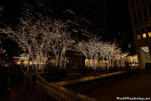 Lights on the Trees at the Rockefeller Center
